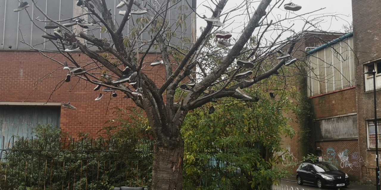 The Tree Conjuring Up Urban Myths – What's the story?